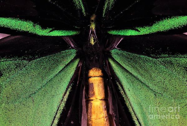 Photograph - Green Wings by John Rizzuto