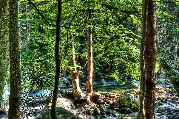 Photograph - Greenbriar Landscape by Barry Jones