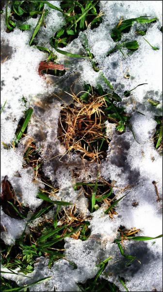 Photograph - Greenbrowngrasscomp 2009 by Glenn Bautista
