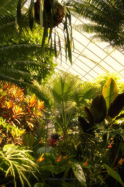 Wall Art - Photograph - Greenhouse 02 by Thomas Woolworth