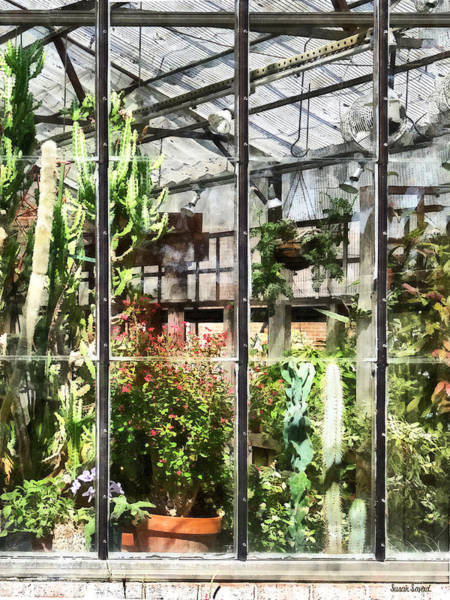 Photograph - Greenhouse With Large Cactus by Susan Savad