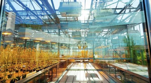 Glasshouse Photograph - Greenhouse by Wladimir Bulgar
