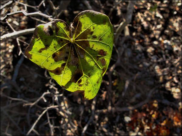 Photograph - Greenleafcomp 2009 by Glenn Bautista