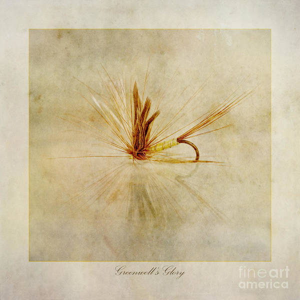 Freshwater Wall Art - Photograph - Greenwells Glory by John Edwards