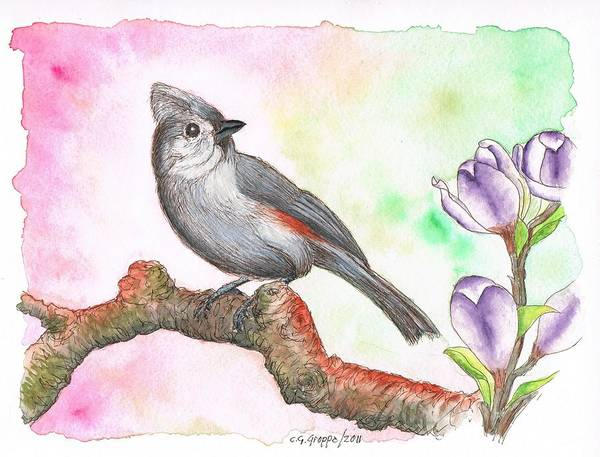 Titmouse Painting - Grey Bird Tufted Titmouse by Carlos G Groppa