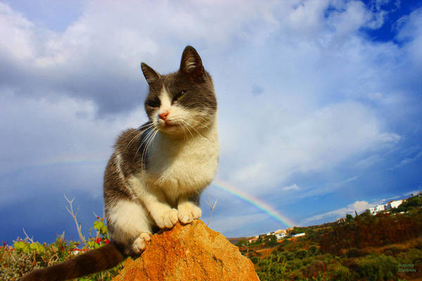 Photograph - Grey Cat And Rainbow by Augusta Stylianou