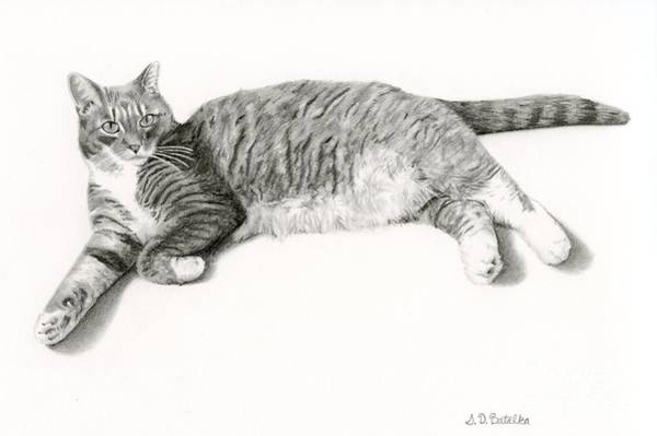 Pet Portrait Drawing - Frieda by Sarah Batalka