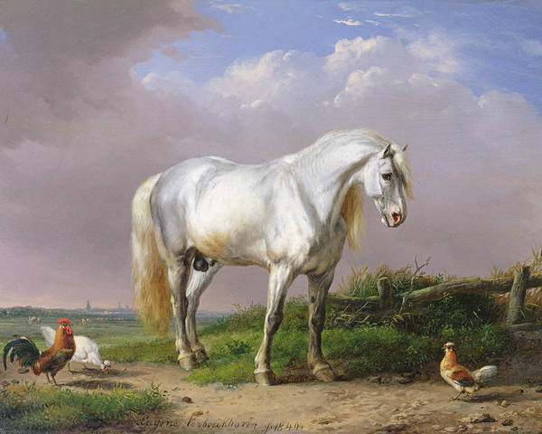 Eugene Joseph Verboeckhoven Painting - Grey Stallion by Eugene Joseph Verboeckhoven