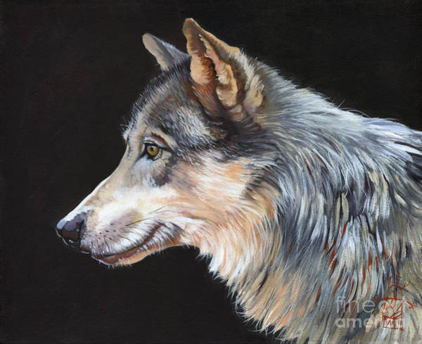 Wall Art - Painting - Grey Wolf by J W Baker