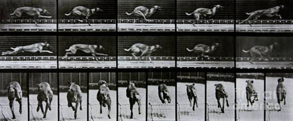 Sequence Photograph - Greyhound Running by Eadweard Muybridge