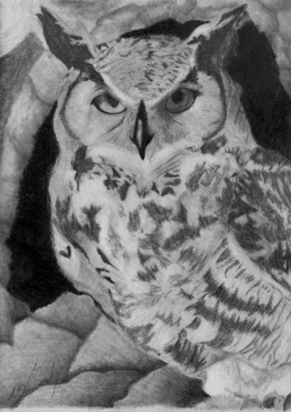Nocturnal Drawing - Greyscale Owl by Tracie Ballensky