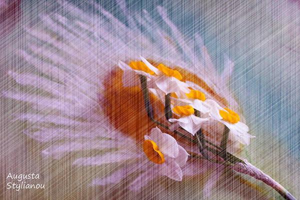 Digital Art - Grid Above Flowers by Augusta Stylianou