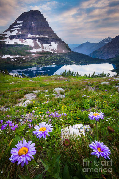 Montana State Photograph - Hidden Lake Flowers by Inge Johnsson