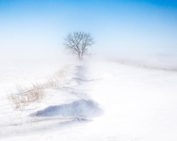 Photograph - Ground Blizzard by David Wynia
