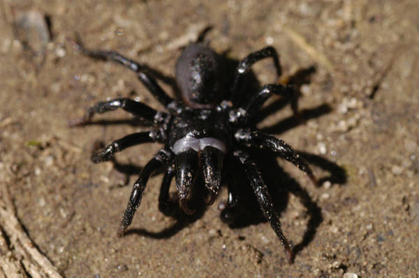 Mendon Photograph - Ground Spider by Paul Whitten
