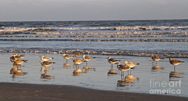 Photograph - Grounded Sea Gulls 1 by Kevin McCarthy