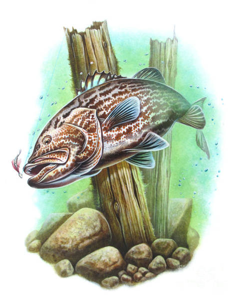 Painting - Grouper Fish by JQ Licensing