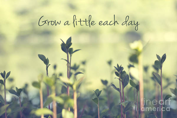 Grow Wall Art - Photograph - Grow A Little Each Day Inspirational Green Shoots And Leaves by Beverly Claire Kaiya