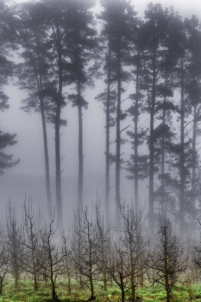 Photograph - Growing In The Fog by Edgar Laureano