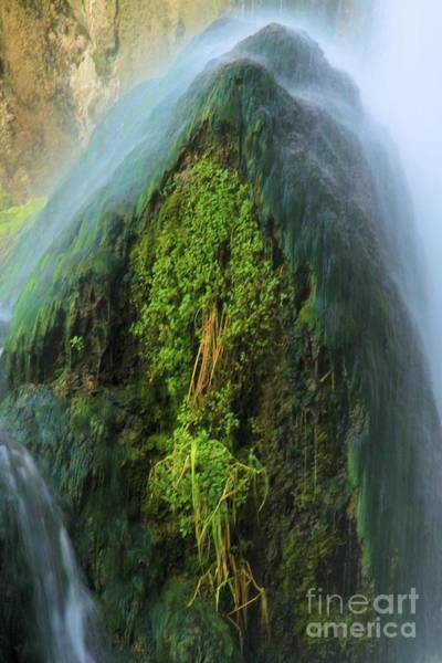 Photograph - Growth Under The Falls by Adam Jewell