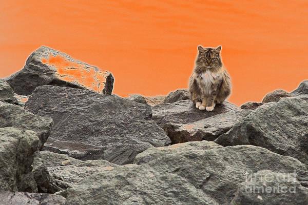 Photograph - Grumpy Cat by Jim West