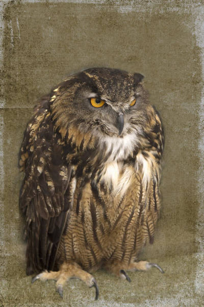 Wall Art - Photograph - Grumpy Owl by Rebecca Cozart