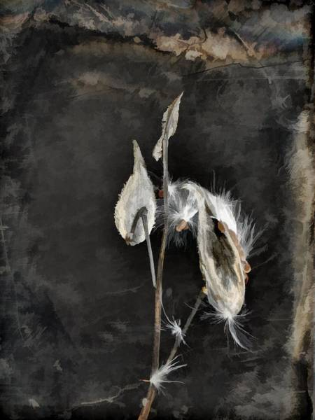 Pod Mixed Media - The Seeds Of Dark Nature by Gothicrow Images
