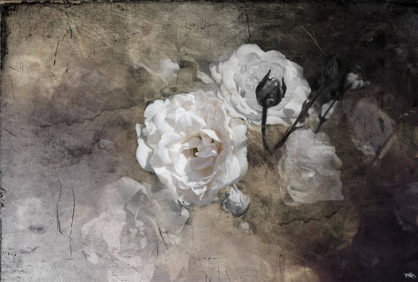 Grunge White Rose Art Print