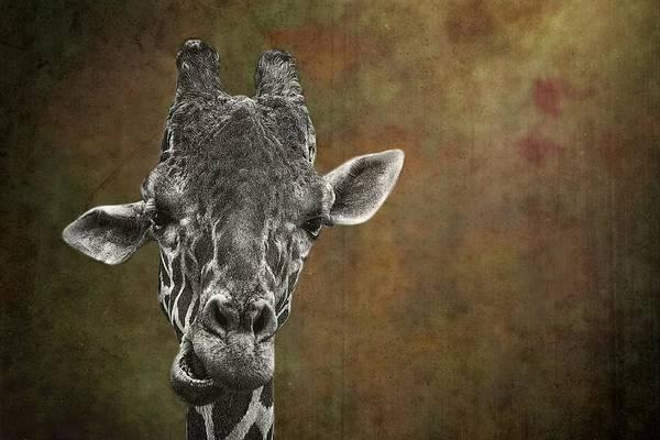 Grungy Giraffe 5654 Brown Art Print