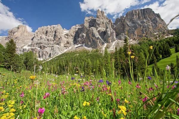 Alpine Meadows Photograph - Gruppo Di Sella Mountains by Bob Gibbons
