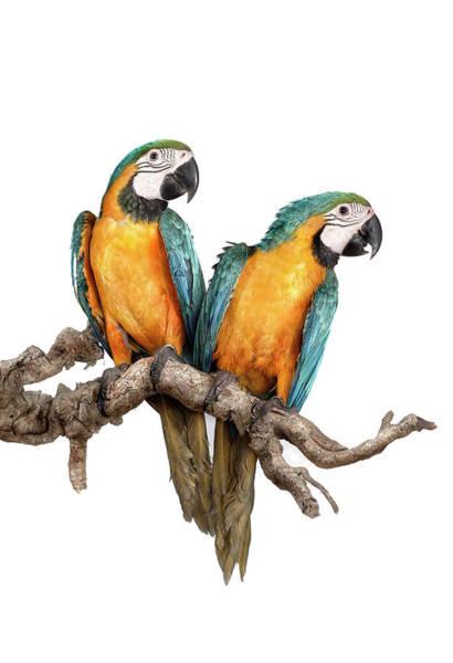 Macaws Photograph - Guacamayos-11-120812 Copia by Silversaltphoto.j.senosiain