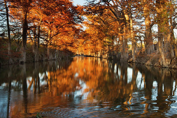 Bald Cypress Wall Art - Photograph - Guadalupe River, Texas Hill Country by Larry Ditto