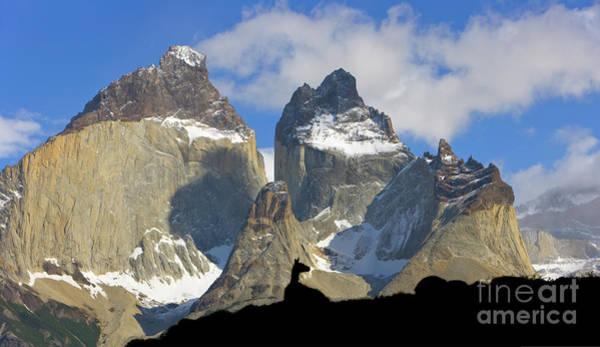 Wall Art - Photograph - Guanaco And Cuernos Del Paine by Yva Momatiuk John Eastcott