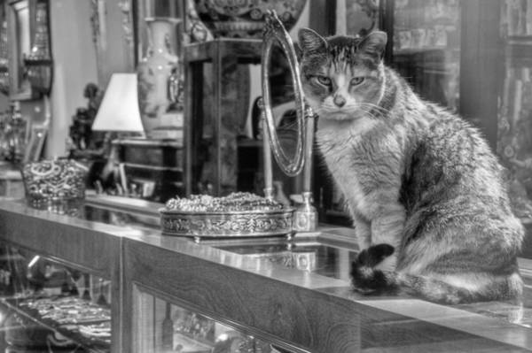 Photograph - Guard Cat by Ron White