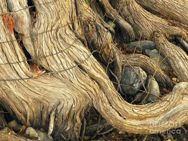 Wire Wrap Photograph - Guardian by Joe Pratt