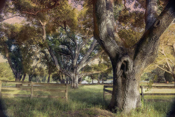 Filoli Photograph - Guardian Of The Gate by Patricia Dennis