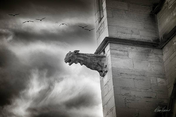 Photograph - Guardian Of The Keep by Diana Haronis