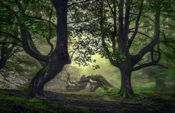 Fog Photograph - Guardians Of The Forest by Fran Osuna