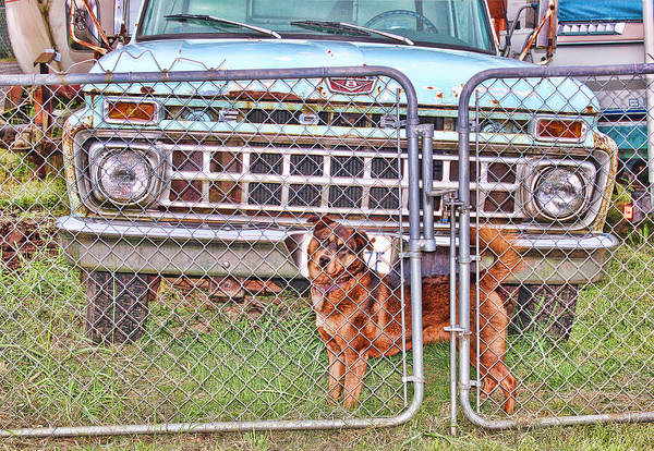 Wall Art - Photograph - Guarding The Ford by Cathy Anderson