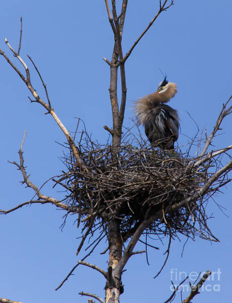 Photograph - Guarding The Nest by Mary Lou Chmura