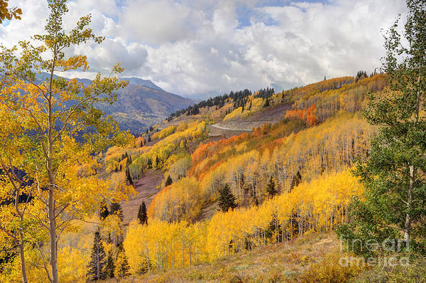 Guardsman Pass Aspen - Big Cottonwood Canyon - Utah Art Print
