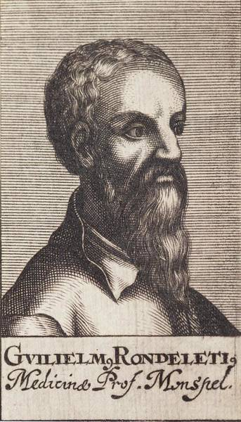 Engraving Photograph - Guillaume Rondelet  by Paul D Stewart