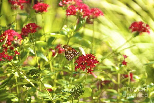 Photograph - Gulf Fritillary Butterfly by Amazing Jules