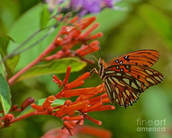 Wall Art - Photograph - Gulf Fritillary Butterfly by AnnaJo Vahle