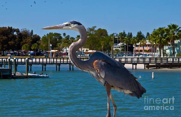Wall Art - Photograph - Gulfport Heron by Stephen Whalen
