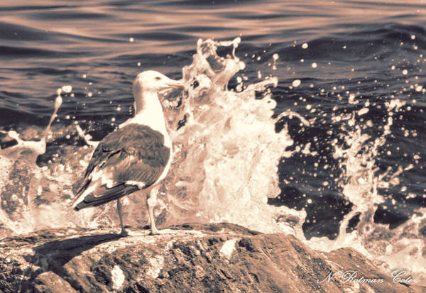 Photograph - Gull And Splash by Natalie Rotman Cote