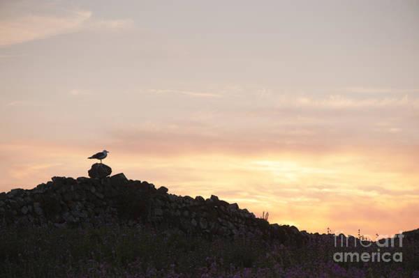 Sun Set Photograph - Gull At Dusk by Anne Gilbert