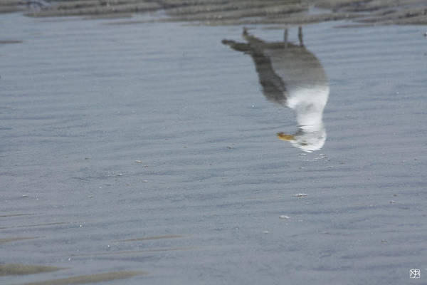 Photograph - Gull At The Beach by John Meader