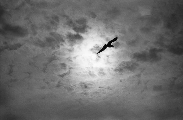 Photograph - Gull by Dave Beckerman