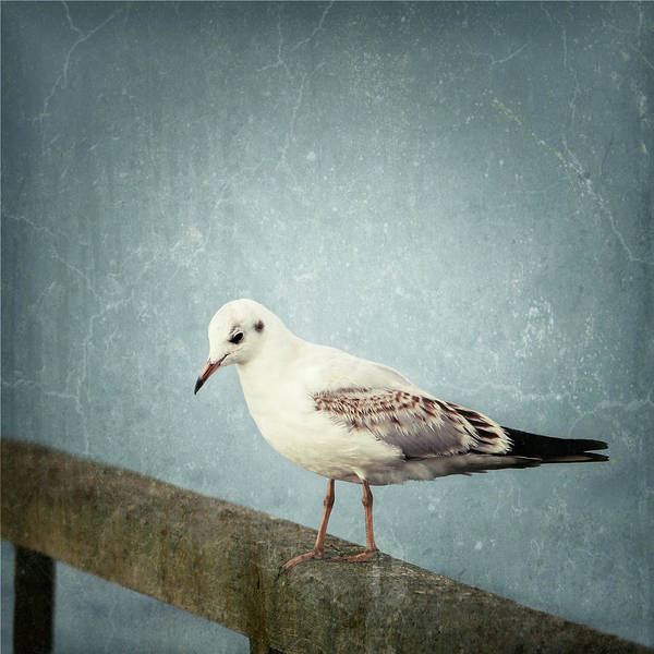 Impression Mixed Media - Gull by Heike Hultsch